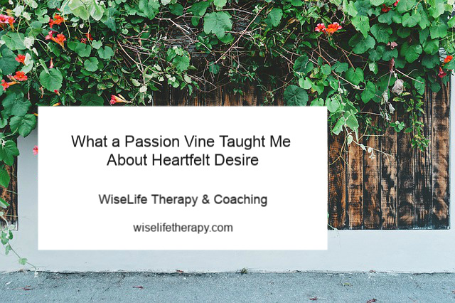 Santa Rosa life coach & psychotherapist Patty Bechtold blogs about heartfelt desire at www.wiselifetherapy.com